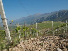Reds, whites give a taste of Calabrian terroir, culture