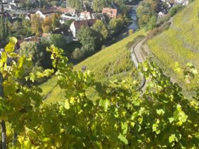 Alsace's 51 grand crus offer wines meriting a closer look
